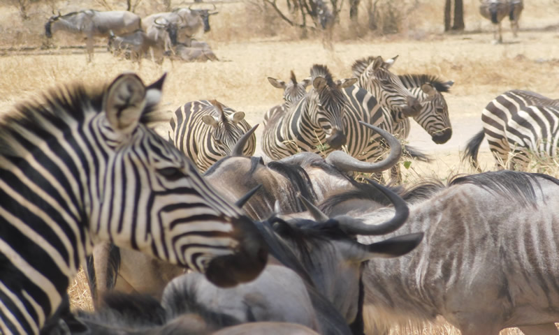 http://theworklady.com/wp-content/uploads/2016/12/Jan-got-to-get-up-close-with-the-zebra.jpg