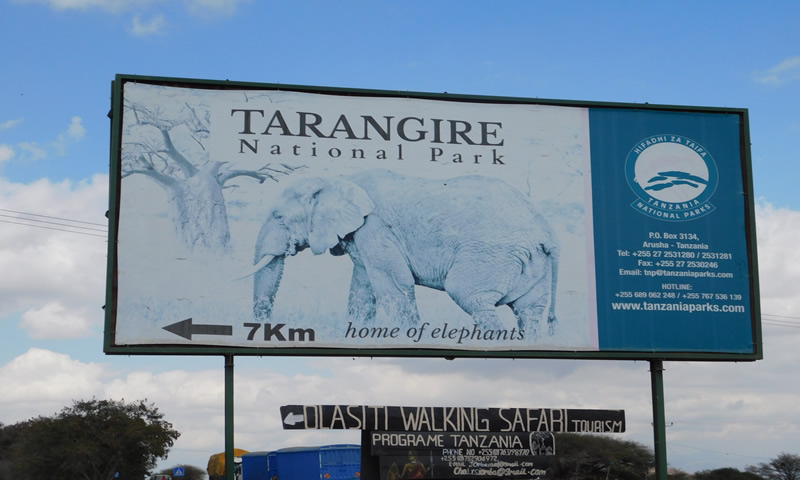 http://theworklady.com/wp-content/uploads/2016/12/Tarangiere-park-had-the-most-zebras-and-wildebeasts.jpg