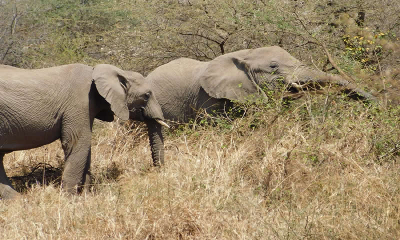 http://theworklady.com/wp-content/uploads/2016/12/elephants-enjoying-a-snack.jpg