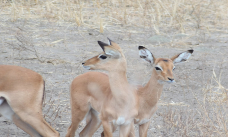 http://theworklady.com/wp-content/uploads/2016/12/there-are-many-types-of-gazelles-on-the-Serengeti.jpg